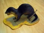 Otter mounted fur